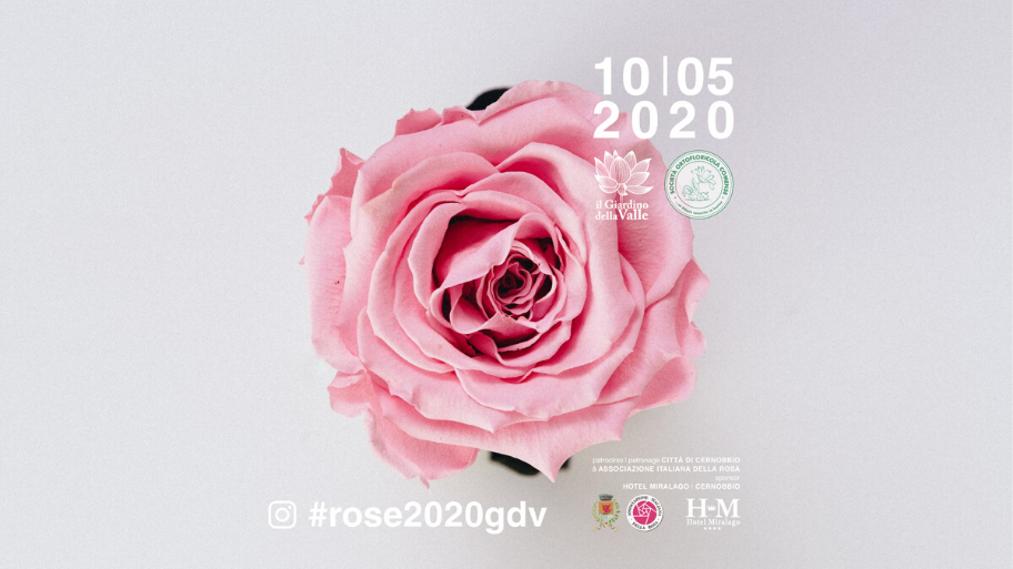 Rose Competition 2020 | Special Instagram Edition